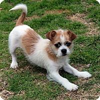 Adopt A Pet :: Lizzy - Waco, TX