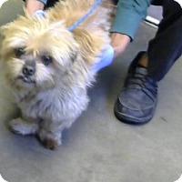 Adopt A Pet :: Bella - Decatur, GA