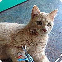 Adopt A Pet :: Cicily - Topeka, KS