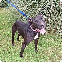 Adopt A Pet :: Teeka - Chatham, VA