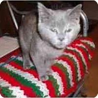 Adopt A Pet :: Norma Jean - Hamburg, NY