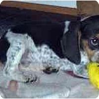 Adopt A Pet :: Ivan - Novi, MI