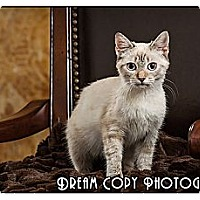 Adopt A Pet :: Nubbins - Owensboro, KY