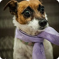 Adopt A Pet :: Maggie in Tulsa - Oklahoma City, OK