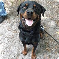 Adopt A Pet :: Ranger - Alachua, GA