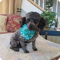 Adopt A Pet :: ***NICHOLAS*** - Stockton, CA
