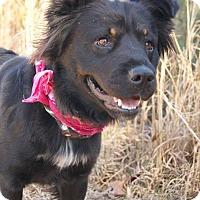 Adopt A Pet :: Ember - Westport, CT