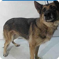 Adopt A Pet :: Xena - Citrus Springs, FL