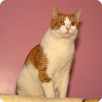 Adopt A Pet :: Snyper - Milford, MA