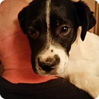 Adopt A Pet :: Lorenzo - Tucson, AZ