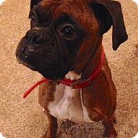 Adopt A Pet :: Zane - Woodbury, MN