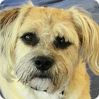 Adopt A Pet :: Ollie - St Louis, MO
