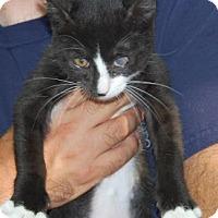 Adopt A Pet :: Joel - Brooklyn, NY