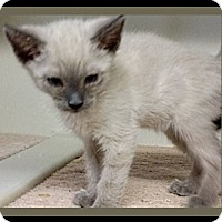 Adopt A Pet :: LEXUS - Red Bluff, CA