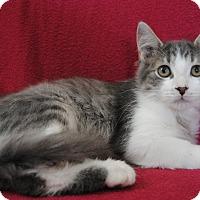 Adopt A Pet :: Watson - Davison, MI