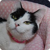 Adopt A Pet :: Sylvie - Fairfax, VA
