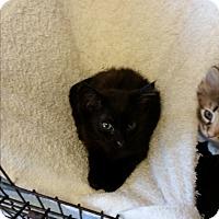 Adopt A Pet :: Yao - Chippewa Falls, WI