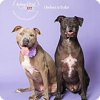 Adopt A Pet :: Chelsea and Duke - Apache Junction, AZ