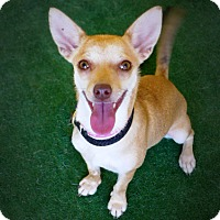 Adopt A Pet :: Taiga - Casa Grande, AZ