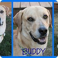Adopt A Pet :: Buddy - McDonough, GA