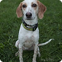 Adopt A Pet :: Ellie Mae - Drumbo, ON