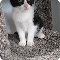 Adopt A Pet :: Frost - Chaska, MN