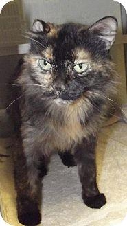 Domestic Shorthair Cat for adoption in Cheboygan, Michigan - 20598