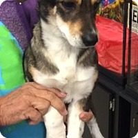 Beagle/Shepherd (Unknown Type) Mix Puppy for adoption in Powder Springs, Georgia - Shea