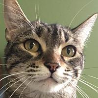 Adopt A Pet :: Trish - Auburn, CA