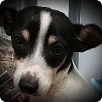 Adopt A Pet :: Rufus - Paducah, KY