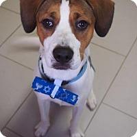 Adopt A Pet :: Ron - Philadelphia, PA