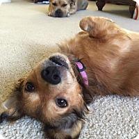 Adopt A Pet :: Conor Kenny - San Diego, CA
