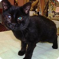 Adopt A Pet :: Butterball - Lebanon, PA