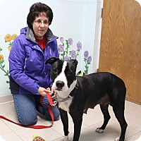 Adopt A Pet :: Betty - Elyria, OH