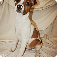 Adopt A Pet :: Electra - Converse, TX