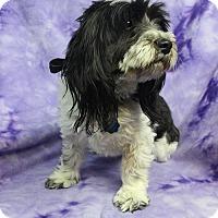Adopt A Pet :: REBECCA - Westminster, CO