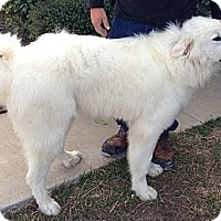 Adopt A Pet :: Zeus - Kempner, TX