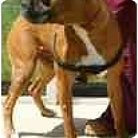 Adopt A Pet :: Flynn - Thomasville, GA