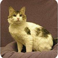 Adopt A Pet :: Pretty Boy - Sacramento, CA
