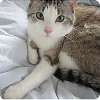 Adopt A Pet :: Mister Sienna - Chicago, IL