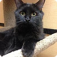 Adopt A Pet :: Newton - Monroe, GA