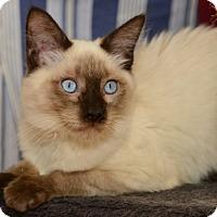 Adopt A Pet :: Renjii - Davis, CA