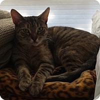 Adopt A Pet :: Sabine - Los Angeles, CA