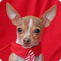 Adopt A Pet :: Tiny Ricky - Irvine, CA