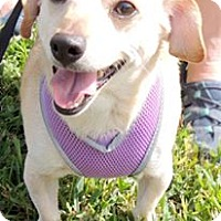 Adopt A Pet :: Auggie - Humble, TX