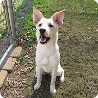 Adopt A Pet :: Tessa (being fostered in GA) - Cranston, RI