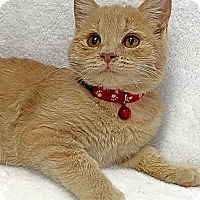 Adopt A Pet :: Slimer - Mission Viejo, CA