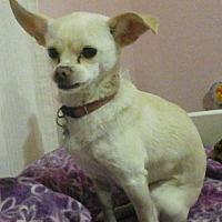Adopt A Pet :: Bubbles - Van Nuys, CA