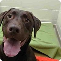 Adopt A Pet :: BRODY - Anchorage, AK