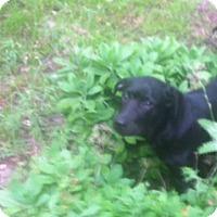 Adopt A Pet :: Monty - Emory, TX